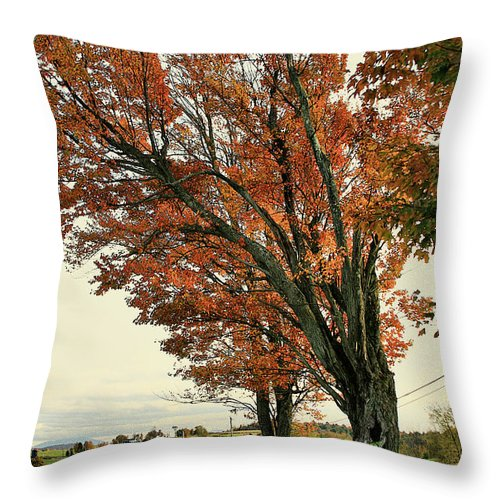 Tree Throw Pillow featuring the photograph Crooked Tree by Deborah Benoit