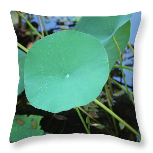 Throw Pillow featuring the photograph Crossing The Lily Pond Outback Number One by Heather Kirk