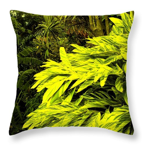 Croton Throw Pillow featuring the photograph Croton Cascading Down The Hillside by Ian MacDonald