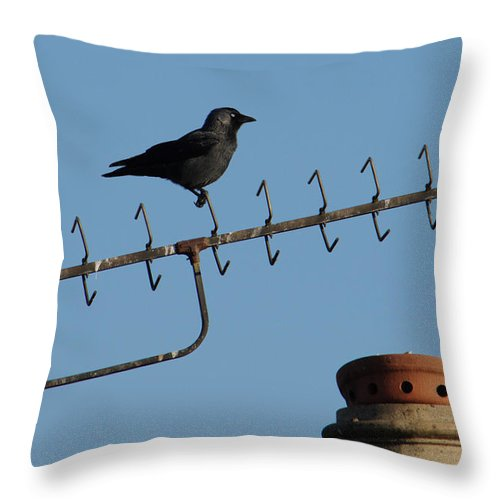 Bird Throw Pillow featuring the photograph Crow On Aerial by Adrian Wale