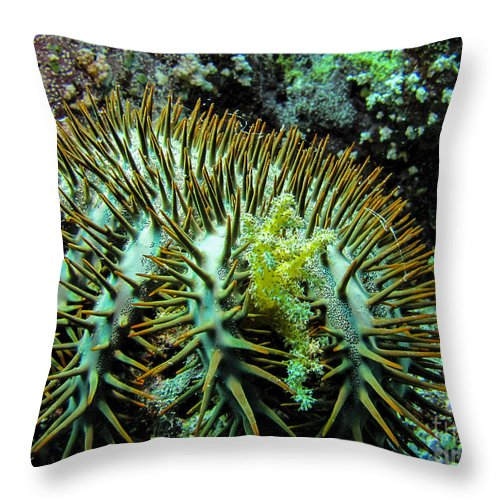 Coral Throw Pillow featuring the photograph Crown Of Thorns In Pohnpei by Dan Norton