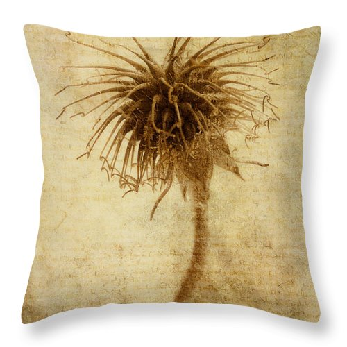 Seed Head Throw Pillow featuring the photograph Crown Of Thorns by John Edwards