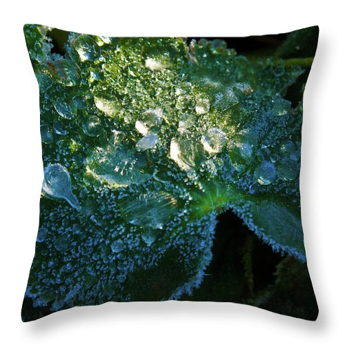 Crystal Throw Pillow featuring the photograph Crystal Lady's Mantle by Douglas Barnett