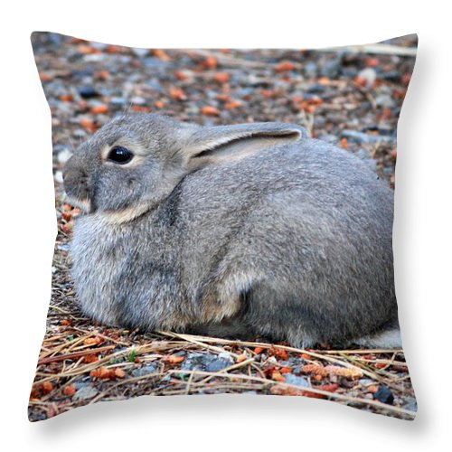 Rabbit Throw Pillow featuring the photograph Cuddly Campground Bunny by Carol Groenen