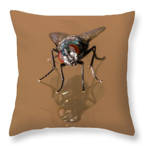 Afternoon Throw Pillow featuring the photograph Curiosity At Its Best by Barbara Fagan Sullivan