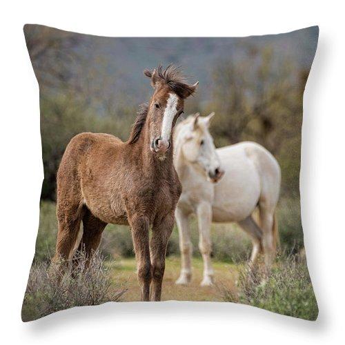 Wild Horses Throw Pillow featuring the photograph Curiosity by Saija Lehtonen