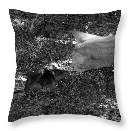 T Throw Pillow featuring the photograph Curious by David Lee Thompson