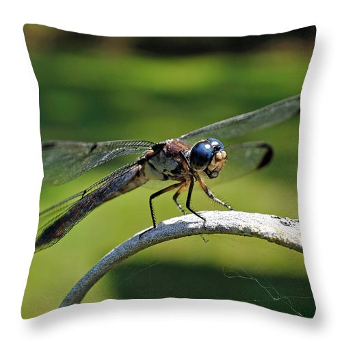 Dragonfly Throw Pillow featuring the photograph Curious Dragonfly by Kenneth Albin