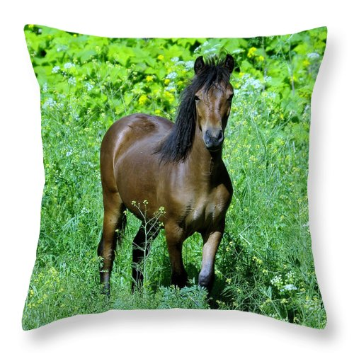 Horse Throw Pillow featuring the photograph Curious Horse by Jeff Swan