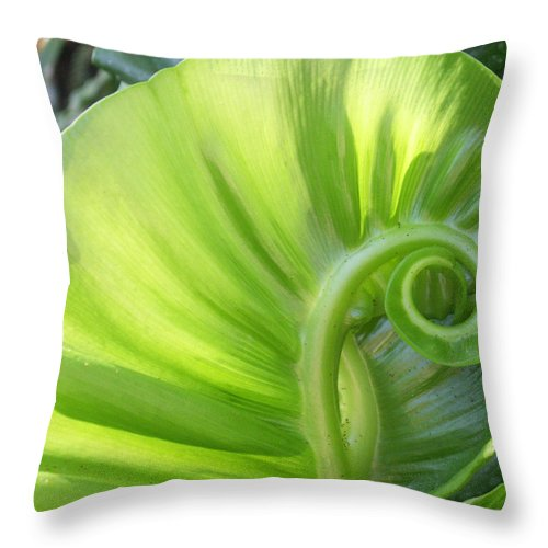 Leaf Throw Pillow featuring the photograph Curly Leaf by Amy Fose