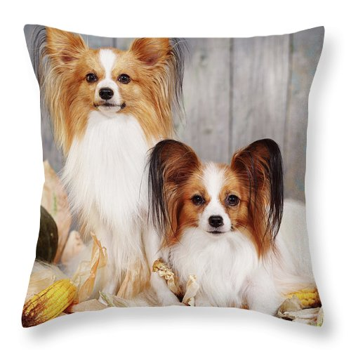 Iuliia Malivanchuk Throw Pillow featuring the photograph cute couple dogs breed papillon by Iuliia Malivanchuk by Iuliia Malivanchuk