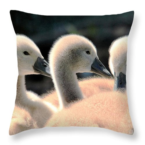 Swan Throw Pillow featuring the photograph Cygnets by David Rose-Massom