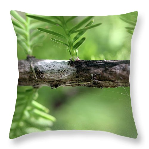 Trees Throw Pillow featuring the photograph Cypress Branch by Mary Haber