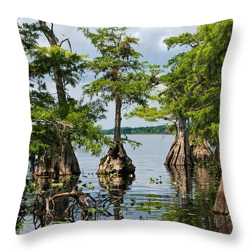 Trees Throw Pillow featuring the photograph Cypress Reflections by Christopher Holmes