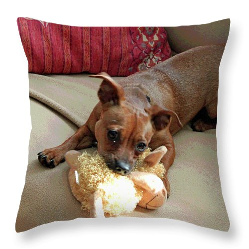 Dog Throw Pillow featuring the photograph Cyrus The Great by Suzanne Gaff