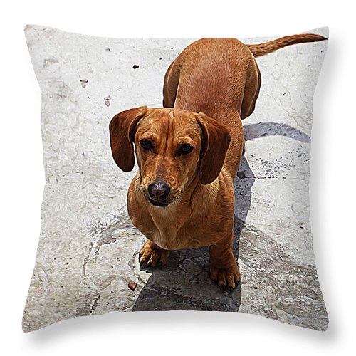Dachshund Throw Pillow featuring the painting Dachshund by Queso Espinosa