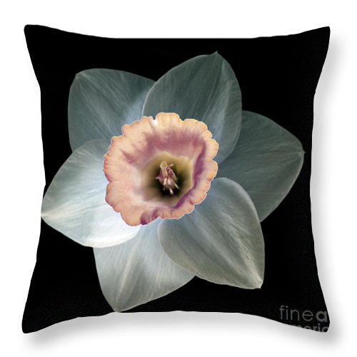 Daffodil Throw Pillow featuring the photograph Daffodil 2 by Tony Cordoza