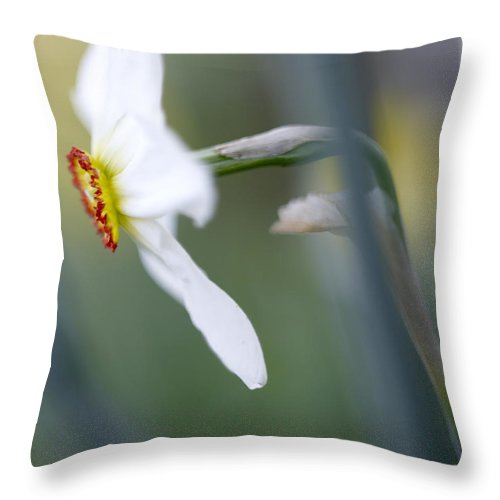 White Throw Pillow featuring the photograph Daffodil 3 by Tony Cordoza