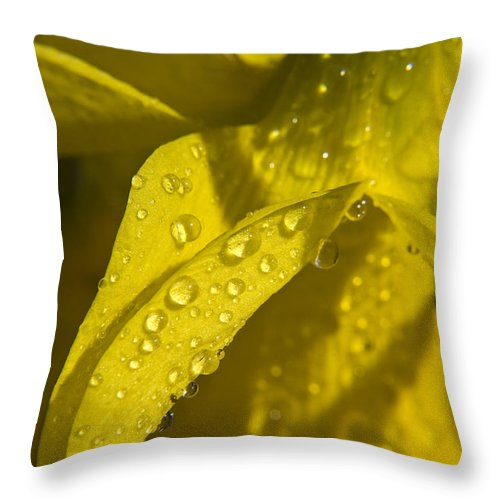Daffodil Throw Pillow featuring the photograph Daffodil Dew by Teresa Mucha