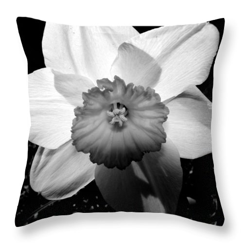 Daffodil Throw Pillow featuring the photograph Daffodil In Springtime by Michelle Calkins