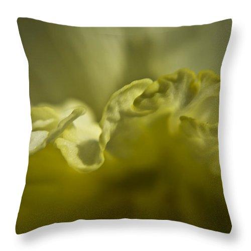 Flower Throw Pillow featuring the photograph Daffodil Ruffles by Teresa Mucha