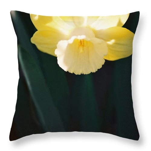 Daffodil Throw Pillow featuring the photograph Daffodil by Steve Karol