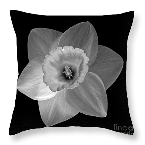 Daffodil Throw Pillow featuring the photograph Daffodil by Tony Cordoza