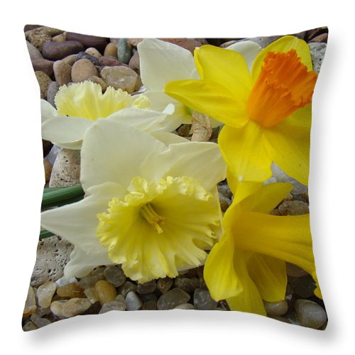 �daffodils Artwork� Throw Pillow featuring the photograph Daffodils Flower Artwork 29 Daffodil Flowers Agate Rock Garden Floral Art Prints by Baslee Troutman