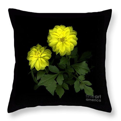 Yellow Throw Pillow featuring the photograph Dahlia by Christian Slanec