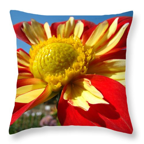 Dahlia Throw Pillow featuring the photograph Dahlia Flower Art Prints Canvas Red Yellow Dahlias Baslee Troutman by Baslee Troutman