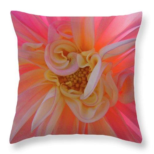 Dahlia Throw Pillow featuring the photograph Dahlia Flower Sunlit Pink White Dahlia Garden Floral by Baslee Troutman