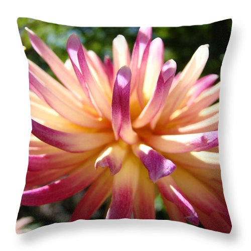 Dahlia Throw Pillow featuring the photograph Dahlia Flowers Art Pink Purple Dahlias Giclee Baslee Troutman by Baslee Troutman