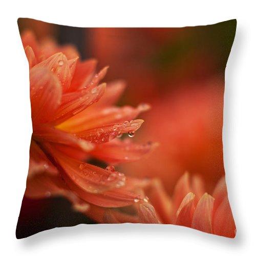 Dahlia Throw Pillow featuring the photograph Dahlia Rainshower by Mike Reid