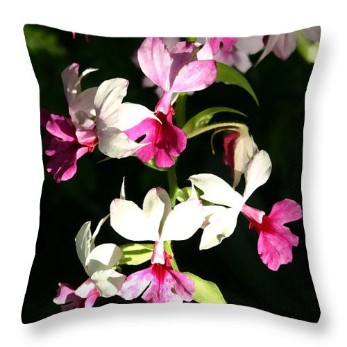 Orchid Throw Pillow featuring the photograph Dainty Orchids by Mary Haber