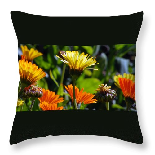 Dasy Throw Pillow featuring the photograph Daisies by Amy Fose