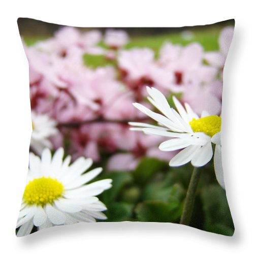 Daisies Throw Pillow featuring the photograph Daisies Flowers Art Prints Spring Flowers Artwork Garden Nature Art by Baslee Troutman