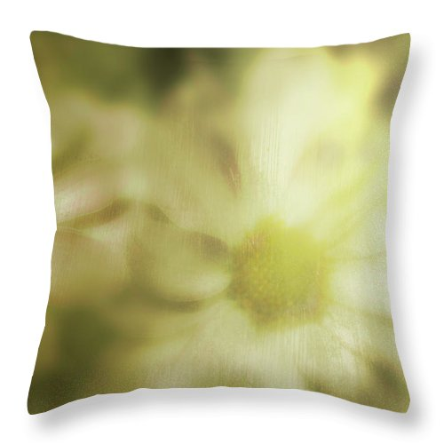 Throw Pillow featuring the photograph Daisies by Gray Artus