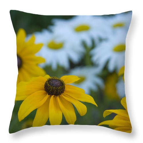 Daisy Throw Pillow featuring the photograph Daisies by Idaho Scenic Images Linda Lantzy