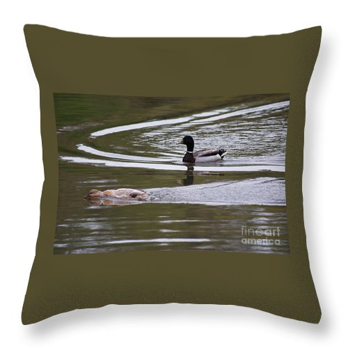 Duck Throw Pillow featuring the photograph Daisy Duke 20130508_286 by Tina Hopkins
