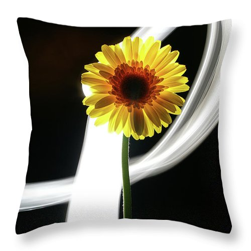 Flower Throw Pillow featuring the photograph Daisy In White by Bruce Bradley