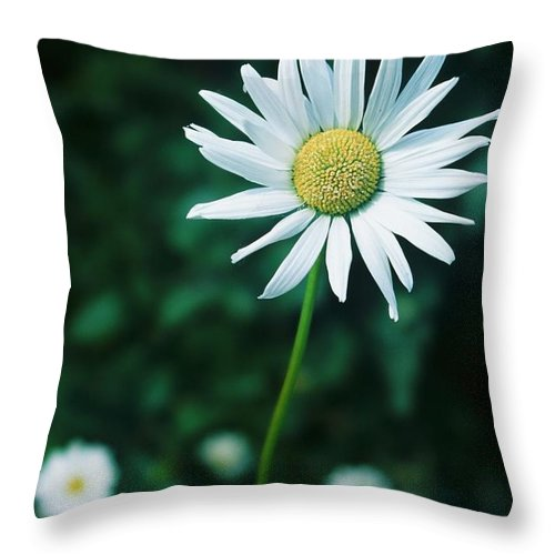 Daisy Throw Pillow featuring the photograph Daisy by Ronnie Glover