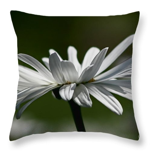 Flower Throw Pillow featuring the photograph Daisy by Teresa Zieba