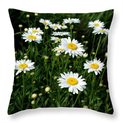 Daisy Throw Pillow featuring the photograph Daisy Tunnel by Valerie Fuqua