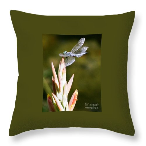 Dragonfly Throw Pillow featuring the photograph Damselfly by Dean Triolo
