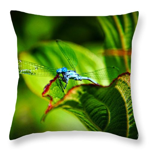 Damselfly Throw Pillow featuring the photograph Damselfly by Mariola Bitner