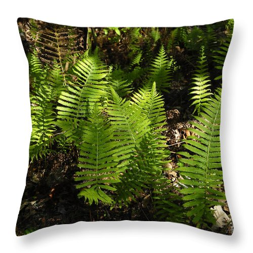 Ferns Throw Pillow featuring the photograph Dancing Ferns by David Lee Thompson