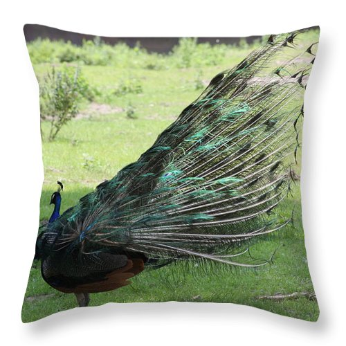Peacock Throw Pillow featuring the photograph Dancing Peacock by Michelle Miron-Rebbe