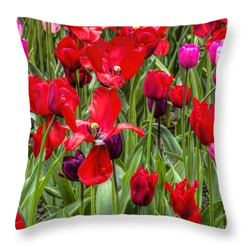 Spring Throw Pillow featuring the photograph Dancing Tulips by Nadia Sanowar