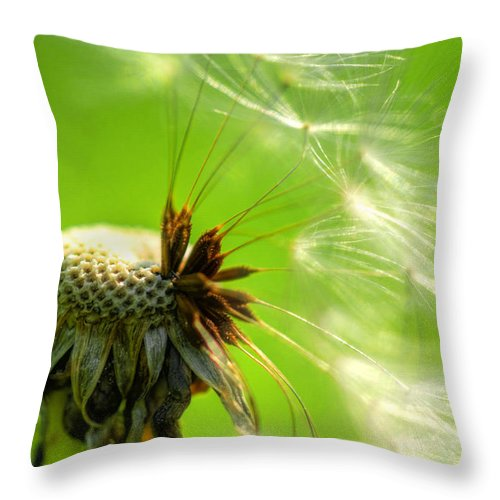 Dandelion Throw Pillow featuring the photograph Dandelion by Alana Ranney