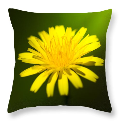 Australian Throw Pillow featuring the photograph Dandelion Flower by Jorgo Photography - Wall Art Gallery